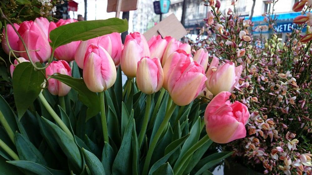 Z2-tulipes