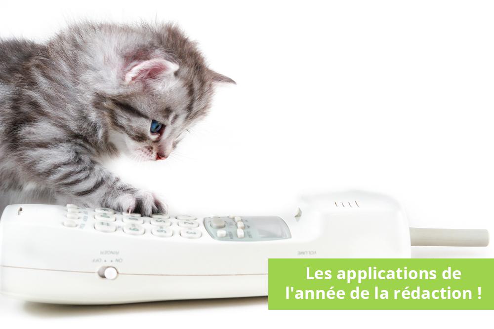 trianglevrh-triangle-veterinary-referral-hospital-tvrh-kitten-and-phone