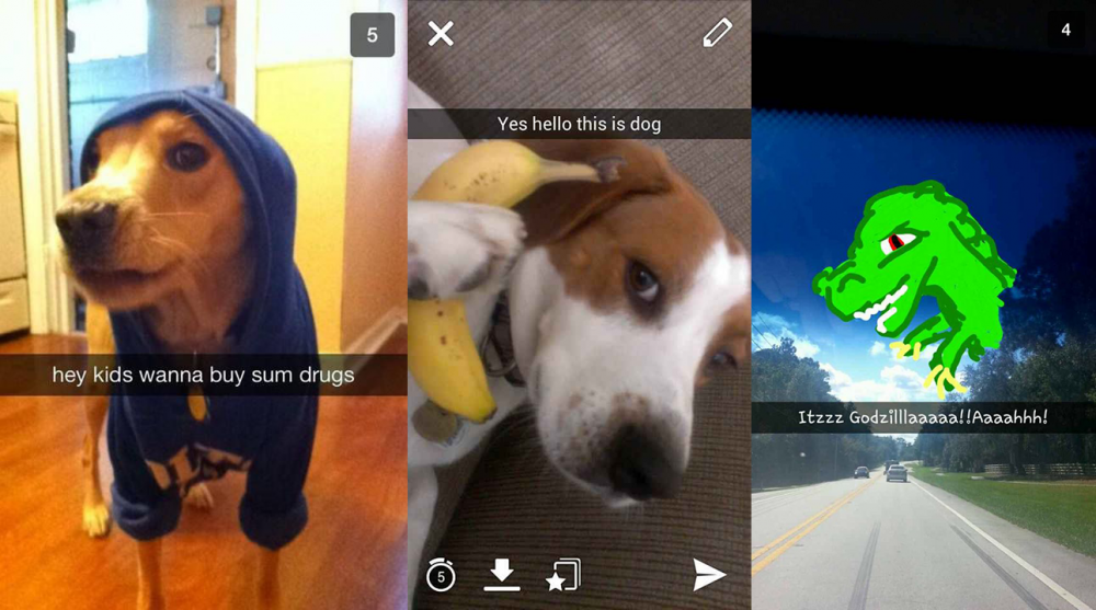 snapchat-dogs