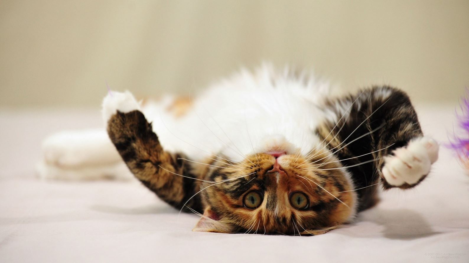 15 applications et objets connect s pour chiens et chats - Chats gratuits ...