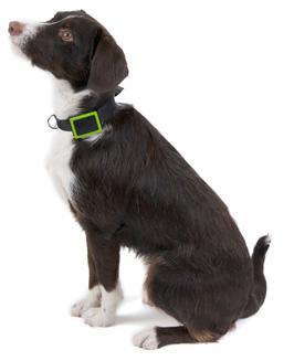dog-with-gps-collar