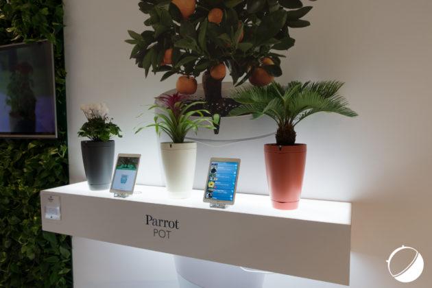 Parrot Pot (1 sur 2)