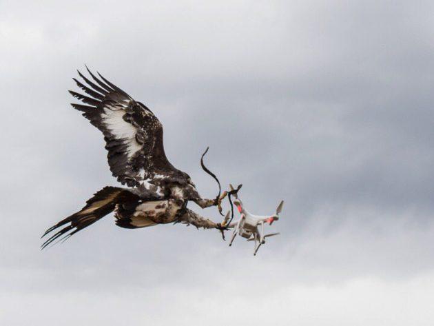 drone-aigle
