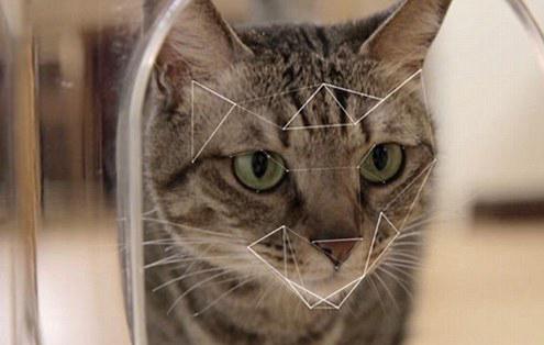 Oreilles pointues, moustaches, miaule constamment pour rentrer ou sortir… c'est bien un chat!