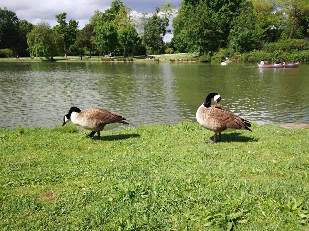 importeur canada goose france