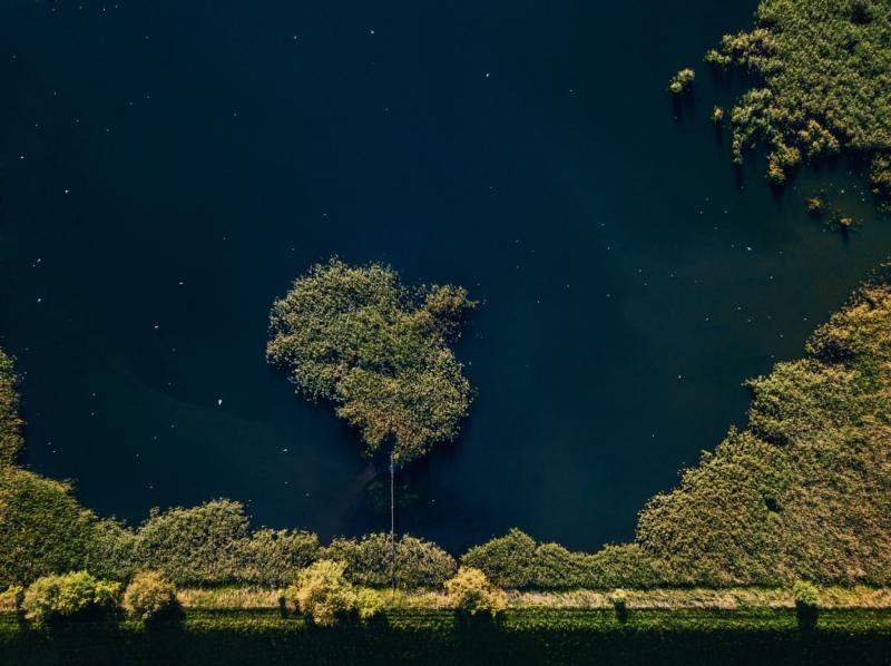 Tree or Island? par Patryk Morzonek