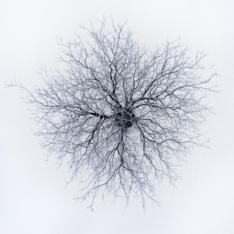 Dendrites par Branko Markovic