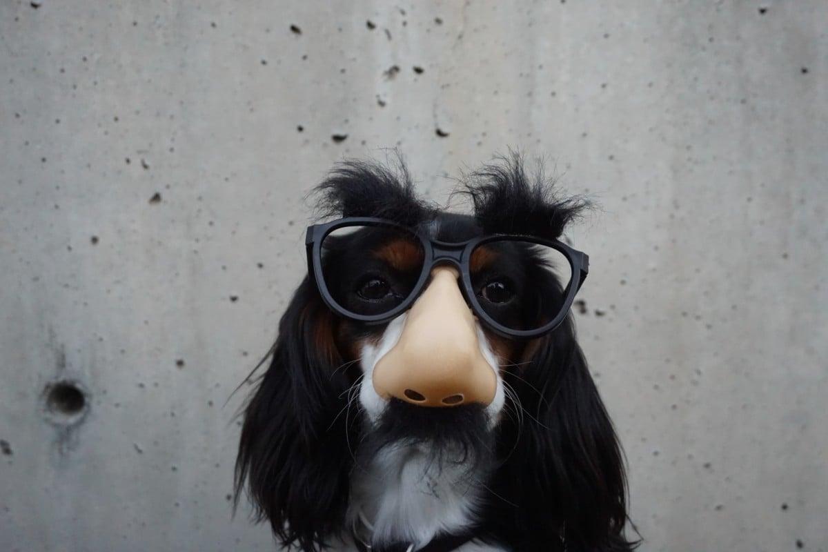 Un chien en mode incognito (crédit : Braydon Anderson sur Unsplash)