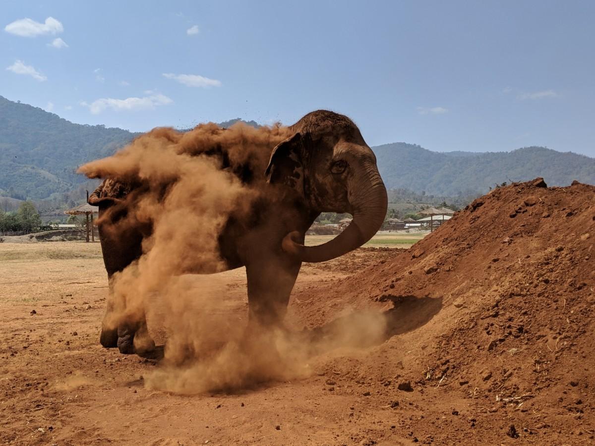 Un éléphant au Elephant Nature Park