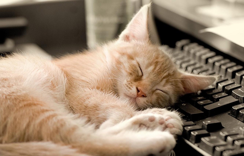 Votre chat ne dormira plus sur votre PC avec ce faux clavier chauffé