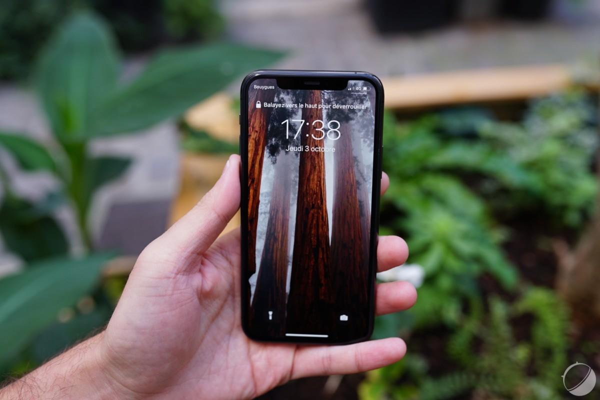 iPhone 11 Pro et des séquoias géants