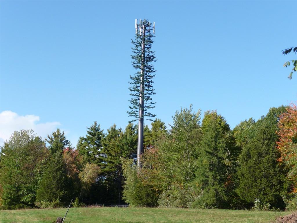 Ce magnifique séquoia géant artificiel fournit de la 4G