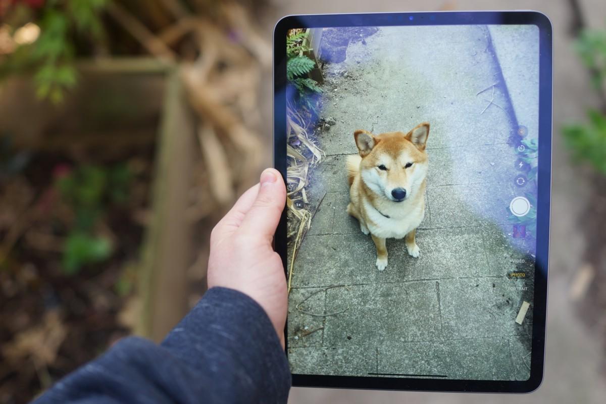 Difficile de prendre des photos avec un iPad (ceci n'est pas de la réalité augmentée, c'est un vrai Shiba)