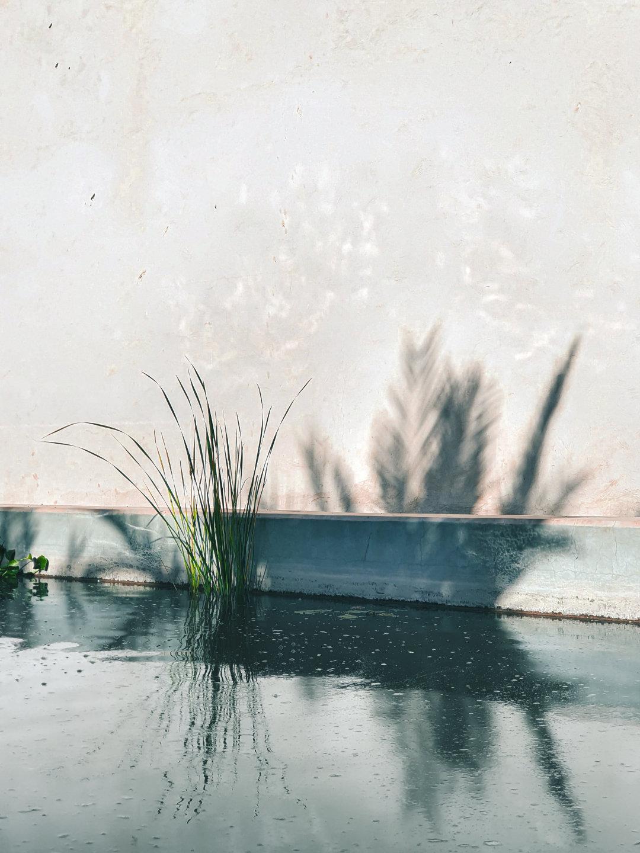 Il suffit parfois d'une ombre projetée par une plante sur un mur pour évoquer la solitude. Photo prise avec le Samsung Galaxy Note10+.