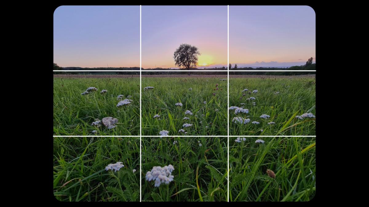 Positionnez la ligne d'horizon sur la ligne horizontale haute (comme c'est le cas ici) ou basse pour commencer votre cadrage. Tout dépend de ce que vous désirez mettre en valeur dans votre photo. Dans notre cas, il s'agit des fleurs situées au premier plan.
