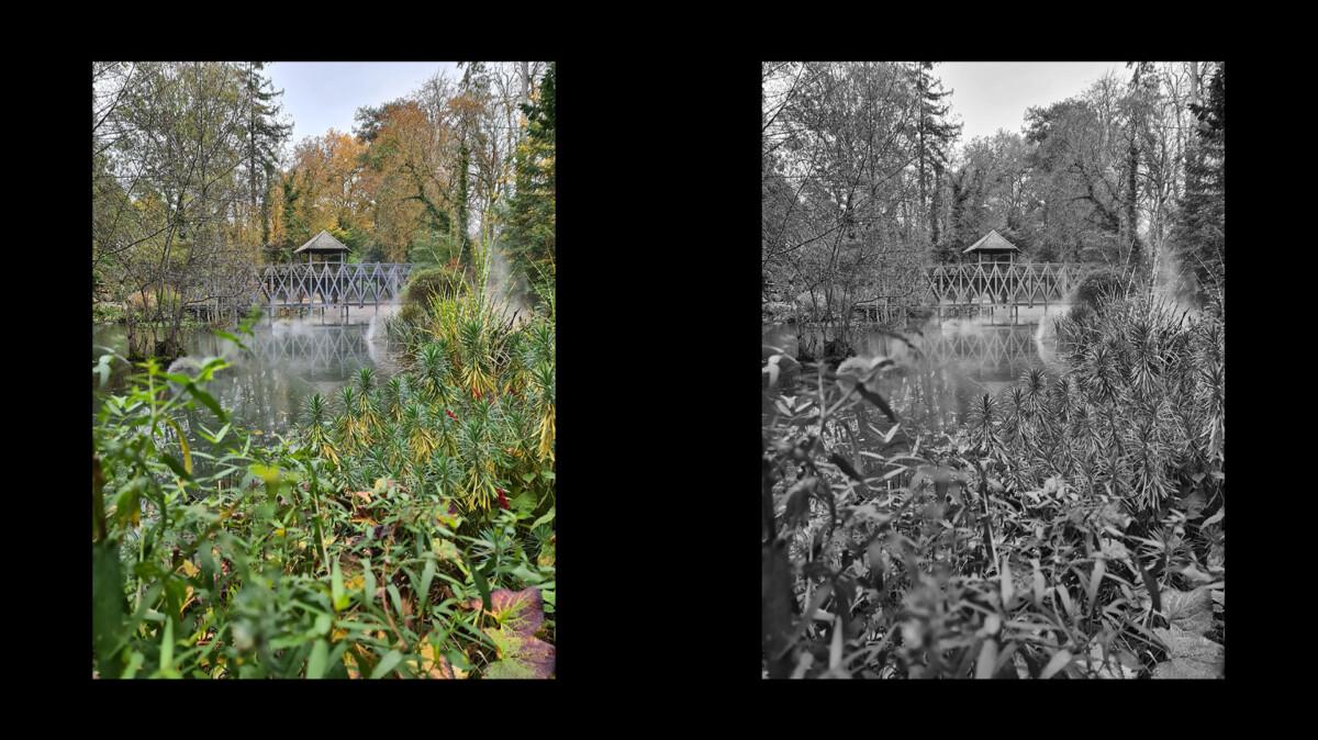 Une fois passée en noir et blanc, cette photo n'a que peu d'intérêt. Le manque de contraste et trop grand nombre de gris différents rendent le cliché terne et sans intérêt.