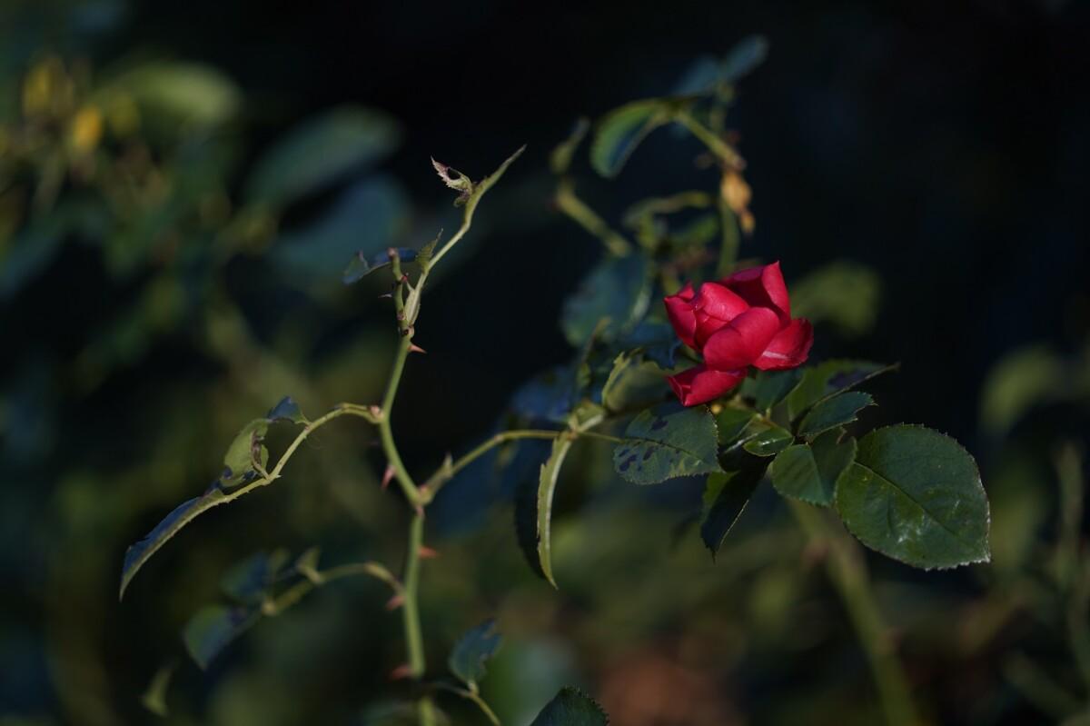 Photo prise avec le Sony A7C