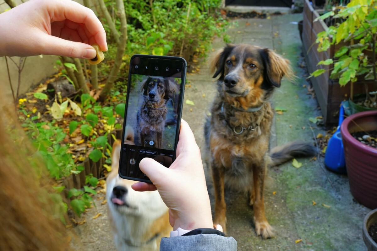 To direct the gaze of a dog, nothing could be simpler, place a treat in evidence near the smartphone.  You will then have his full attention.