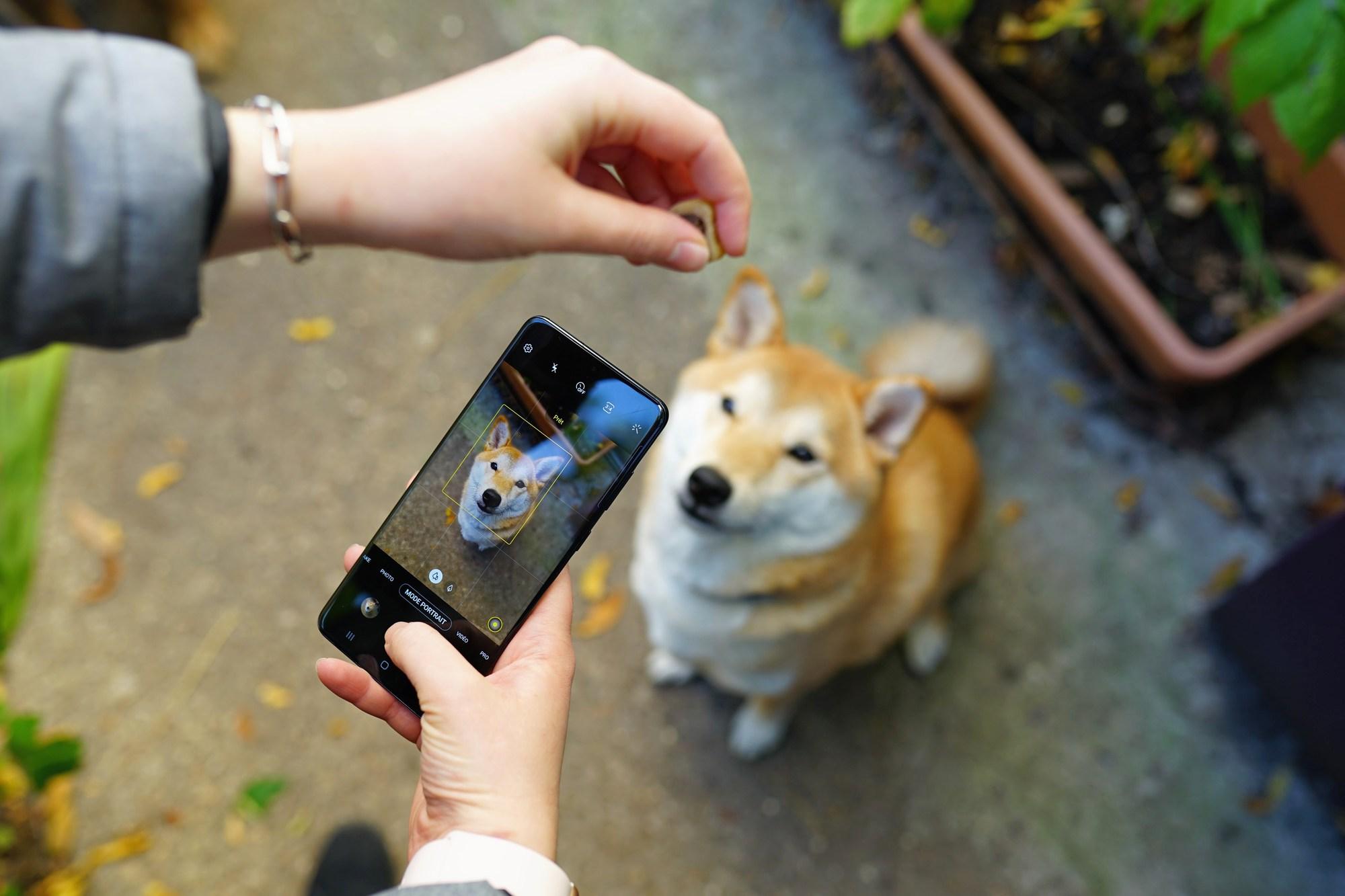 6 conseils pour prendre la photo parfaite de votre chien ou chat avec un smartphone