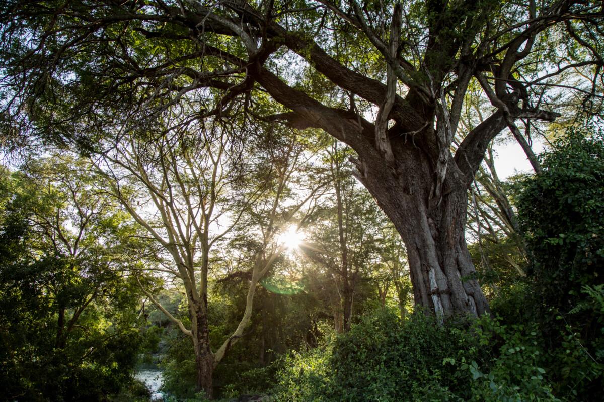 La forêt au coeur des projets du fonds de restauration initié par Apple