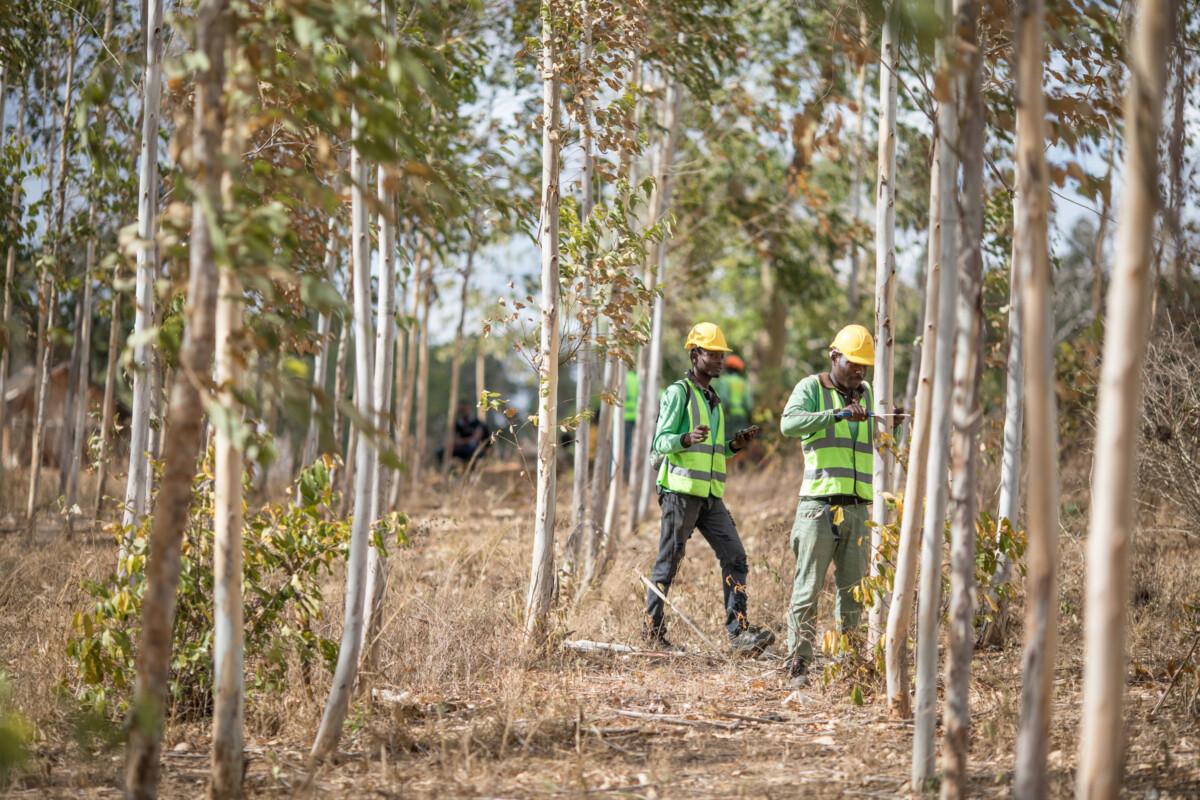 Apple travaille avec Komaza, entreprise forestière qui aide à la protection de la nature et des communautés au Kenuya