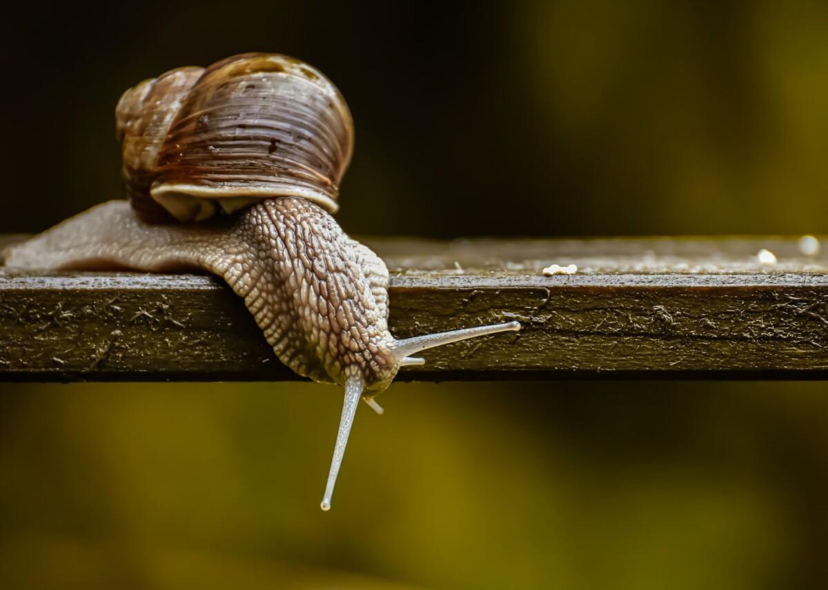 Escargot posé sur une planche