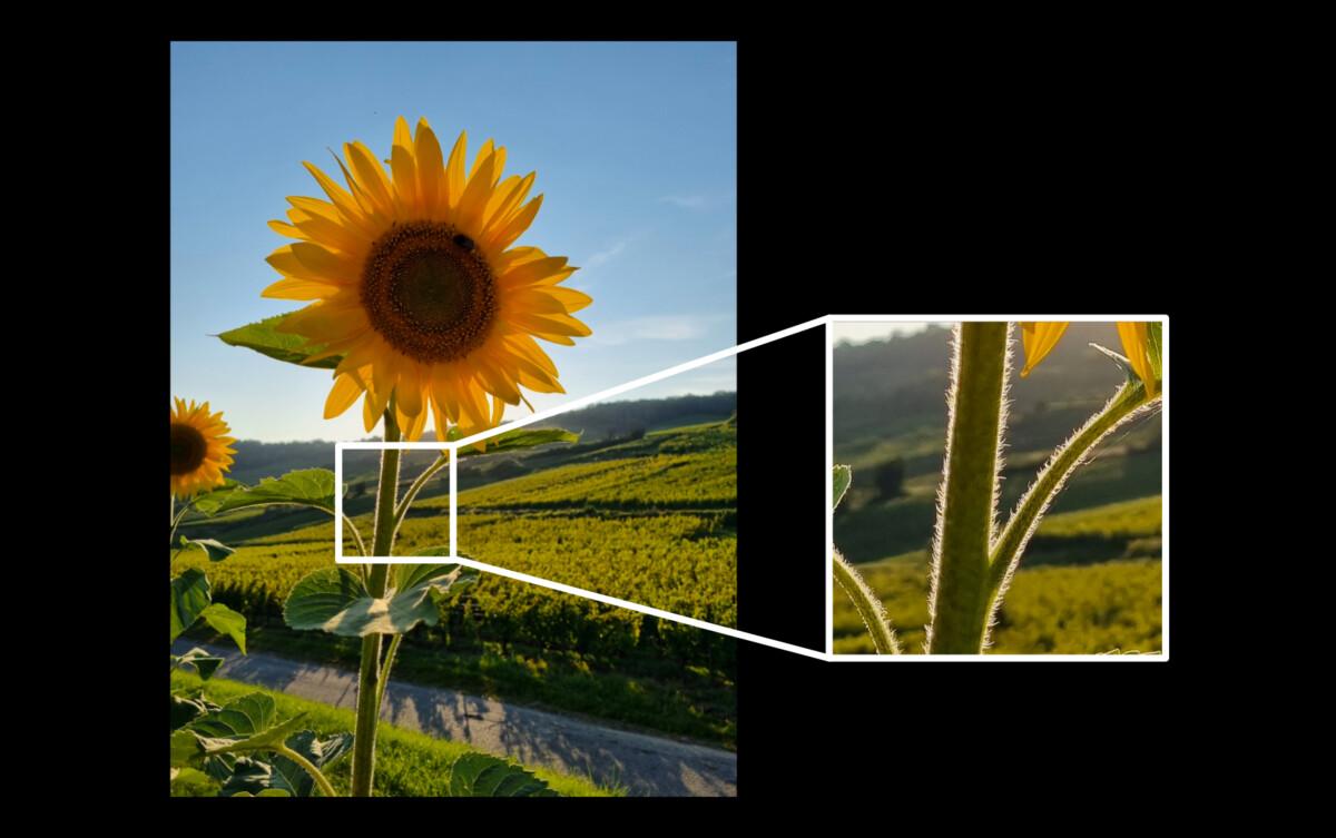 Photos en contre-jour : trois étapes pour les réussir au smartphone